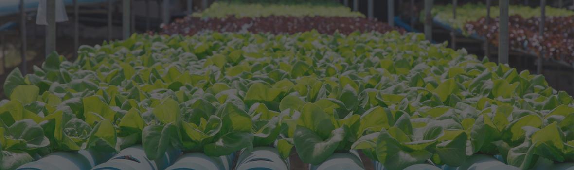 10L gardeners corner Fabric Root Pots For Smart Plant Grow Pot Bags